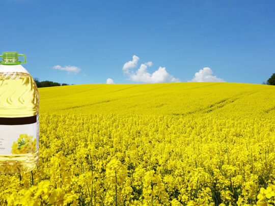 What you need to know about rapeseed oil