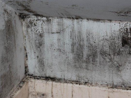 Flipping disaster: a black-mold-ridden home