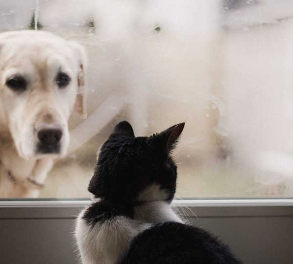 10 factors to consider before bringing a new pet home
