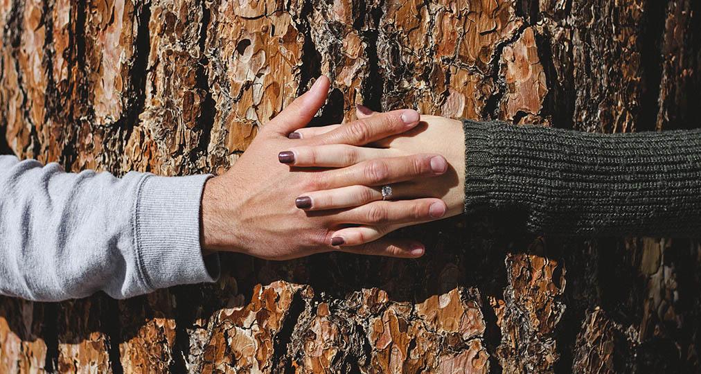 couple hugging a tree