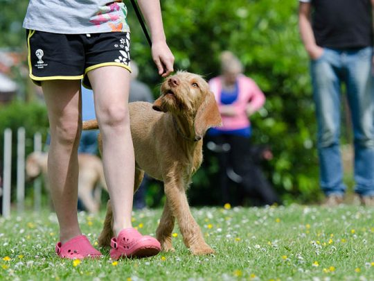 Dog training – a paw in the right direction for your furry friend
