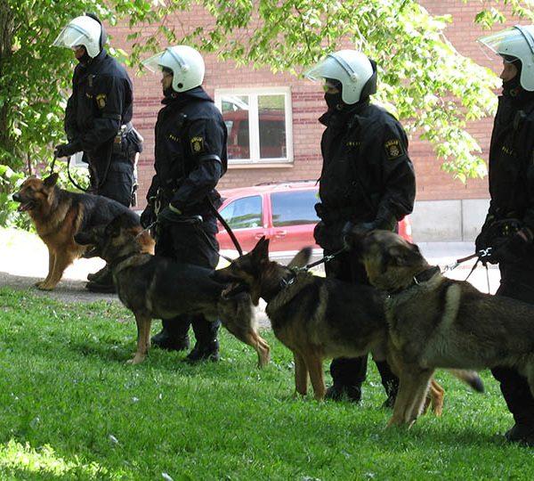 Top 9 dog breeds for police work