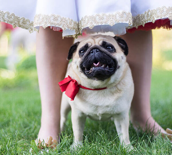 Vital things to consider when including your dog in your wedding